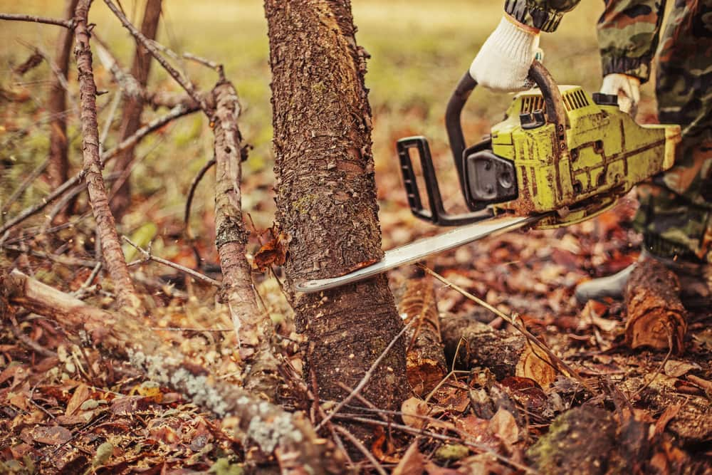 cutting-down-tree-chainsaw-service